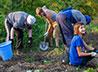 Прихожане помогли собрать урожай для трапезной