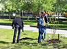 Участники молодежного бала высадили «Троицкую аллею»