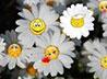 В акции «Белый цветок» поучаствовали сотрудники нескольких каменских заводов