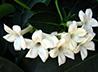 К благотворительному фестивалю сестры милосердия «вырастили» белые цветы