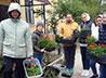 Цветы и декоративные кустарники высадили фармацевты для Обители милосердия