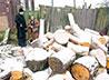 Акция «Подари дрова» обогрела одиноких стариков и семью с 16 приемными детьми