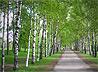 Природный парк «Бажовские места» совместно с Симеоно-Аннинским приходом разрабатывает новый маршрут – «Православная Сысерть»