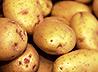 Сто тонн семенного картофеля требуется реабилитационным центрам для бездомных в Среднеуральске и Каменском районе