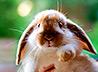 Работа на кролиководческой ферме – один из этапов реабилитации подопечных полевского центра для наркозависимых «Подвижник»