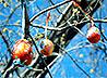 Необычное «Пасхальное дерево» расцвело возле Екатерининской часовни в центре уральской столицы