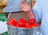 Освященные помидоры с огорода ректора УГГУ отправлены в детский приют