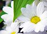 Цветоводы Екатеринбурга пожертвовали цветы к празднику Успения
