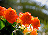 Добровольцы обустроили цветник в верхнесергинском Введенском приходе