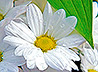 Ровно сто лет назад в Екатеринбурге впервые состоялся благотворительный «Праздник белого цветка»
